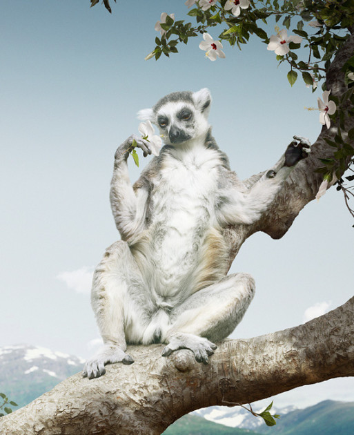 Nature on High: Photographs by Simen Johan