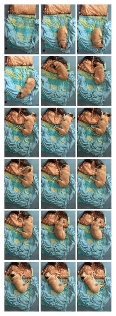 Sleep Snapshots: The Creepy Art of Taking Photos of People Sleeping