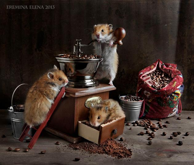 Elena Eremina Captures the Late Night Adventures of Hamsters