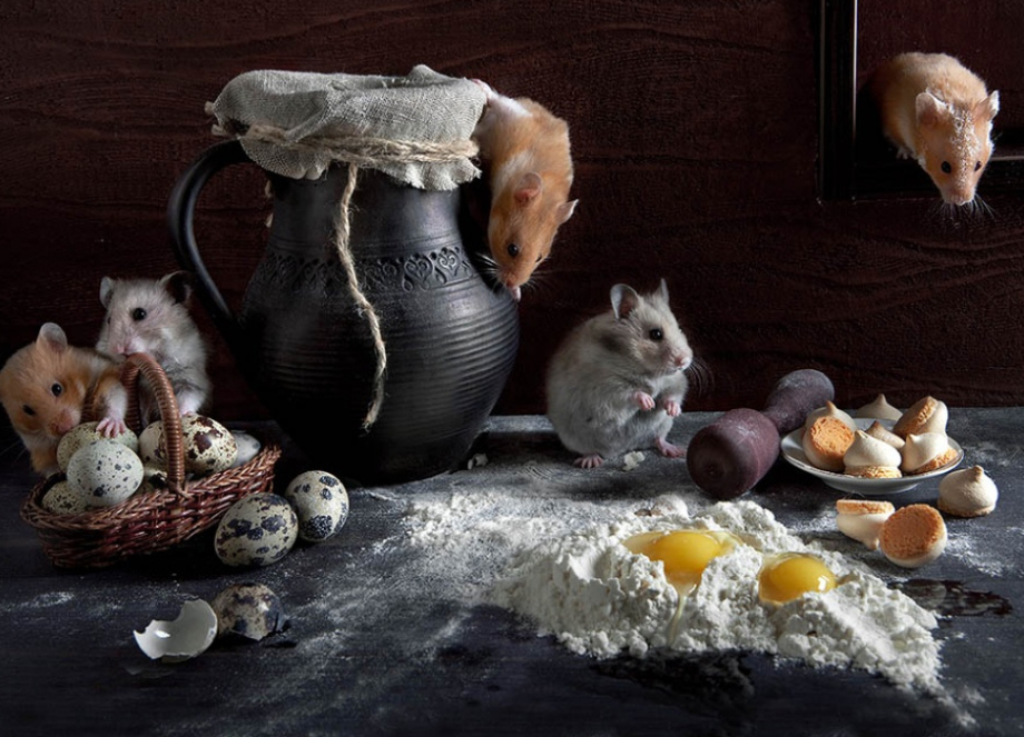 Elena Eremina Captures the Late Night Adventures of Hamsters