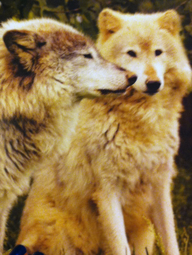 Enjoy the Spirit of the Wolves with Shaun Ellis and Monty Sloan