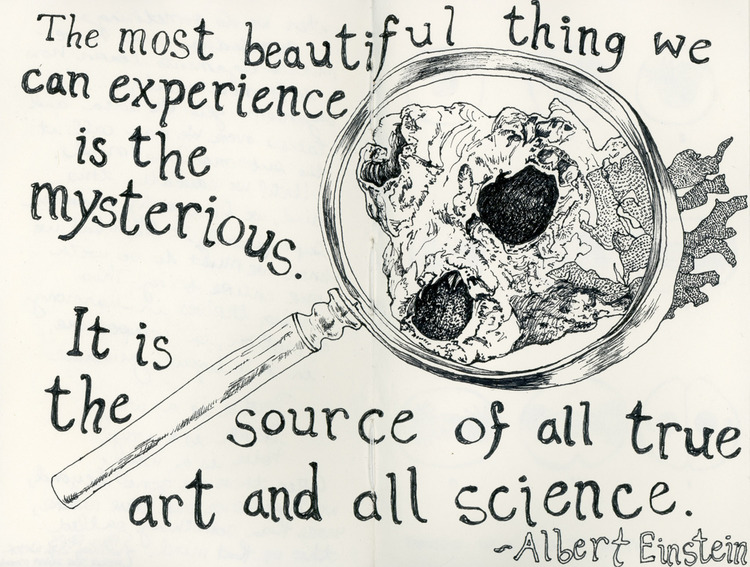 Science-y Sketches and Quotes by Chantal deFelice