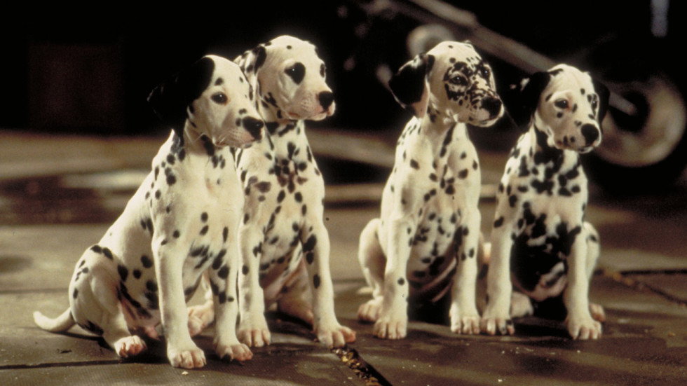 Don't Adopt The Dog: Hollywood Movies And The Portrayal Of Canines