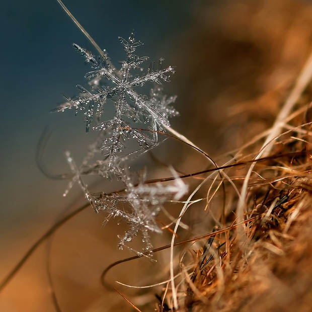 These Macro Photos Show The Remarkable World of Snowflakes We Don't See